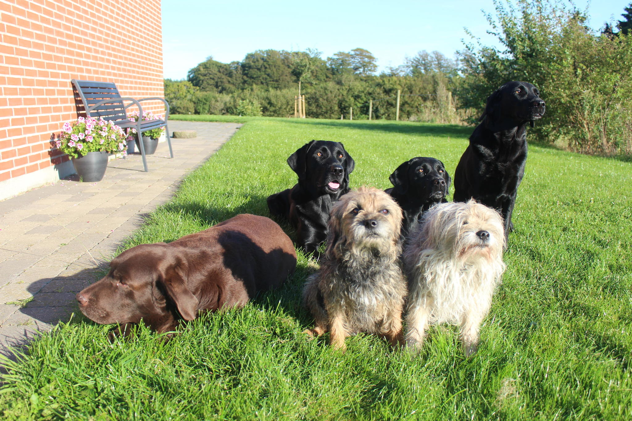 I baggrunden fra venstre: Team Jægerlunden Xander, Rønnesholms Molly og Lumby's Tessa. I forgrunden fra venstre: Fallow Forest Coco, Jægerlunden Blue Fox og Cinderella in Blue (Zoffy).