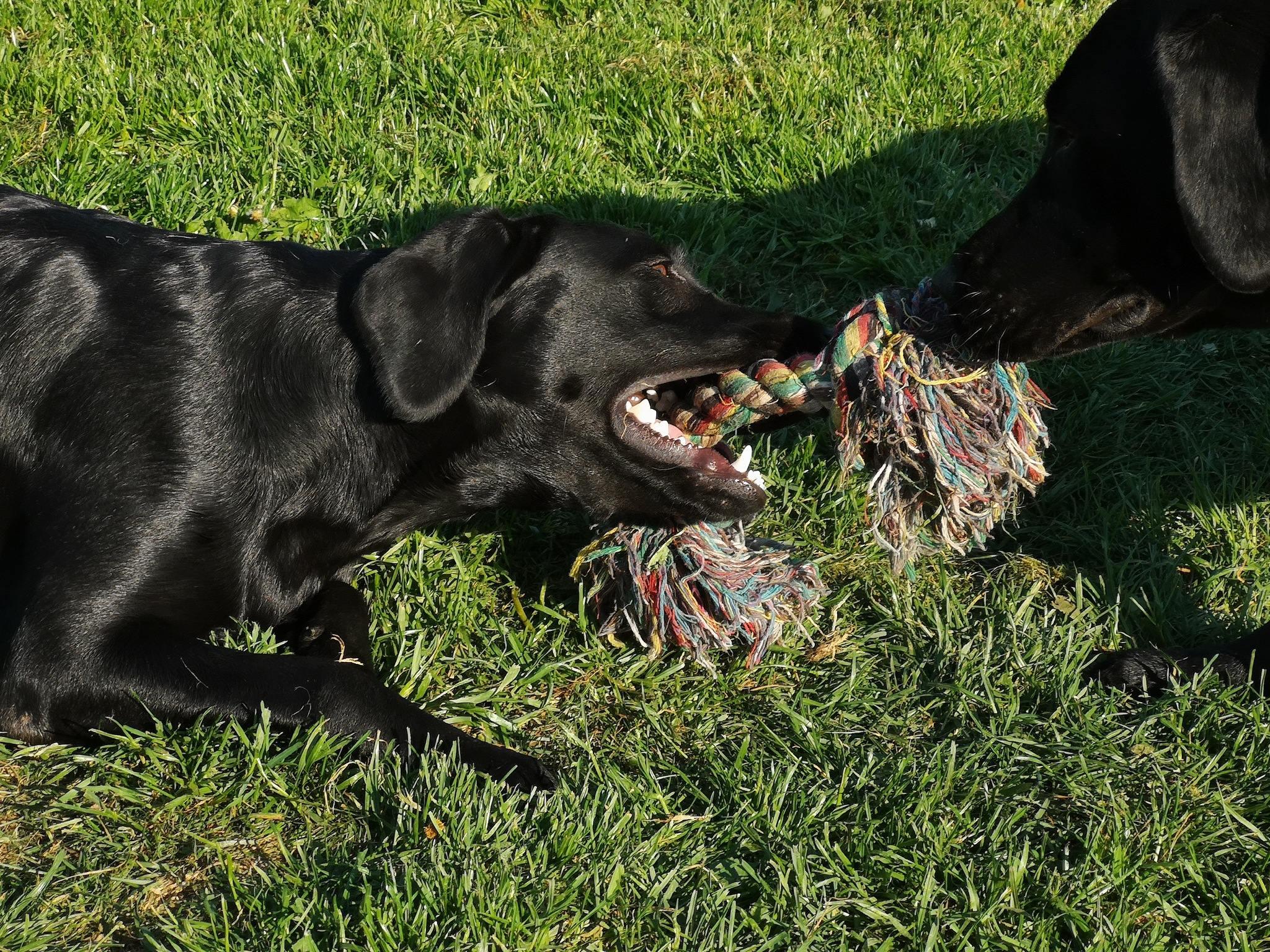 Kenzie (højre) og Indy (venstre)